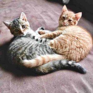 Titelbild von Pflegestellen für Katzen/ Katzenbabys