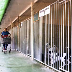 """Vorschaubild: Besuch bei ADA Canals im großen Tierheim """"Tosal"""""""